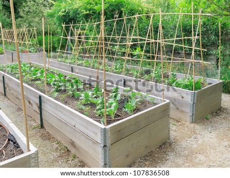Salad and vegetable crop in wooden frames - stock photo