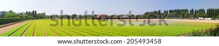 Salad field with water irrigation system panorama - stock photo