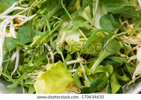 salad green on a plate