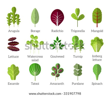Salad ingredients - stock photo