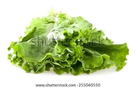 salad isolated on white background - stock photo