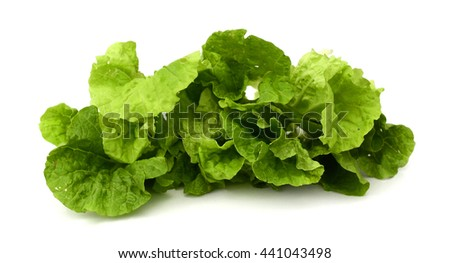 Salad leaf isolated [with clipping path] - stock photo