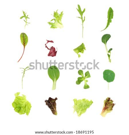 Salad lettuce leaf selection, over white background. - stock photo