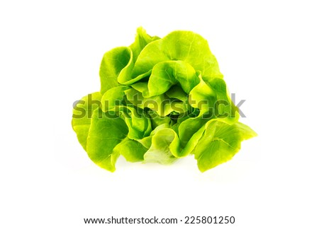 Salad vegetable on the white background