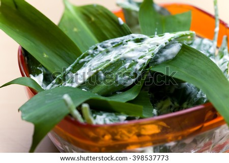 salad with ramson und Sauce