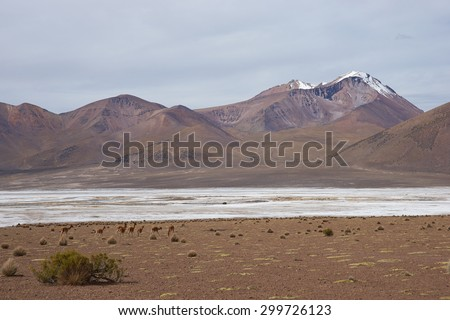 Salar de Surire, a salt lake over 4,000 metres high on the Altiplano of northern Chile in Vicunas National Park.