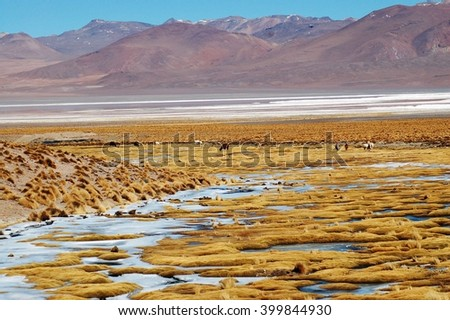 Salar de Uyuni in Bolivia, the world's largest salt flats. You can see Andean Flamingos, Vicuna, Llamas, Alpacas, and amazing scenery - stock photo