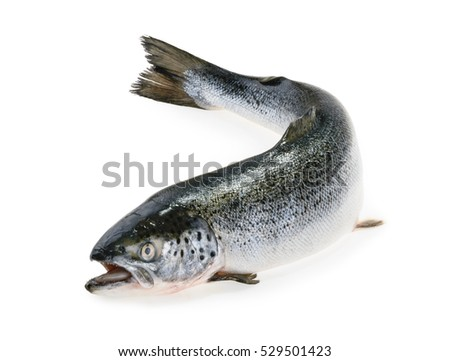Salmon fish stock images royalty free images vectors for Salmon fish pictures