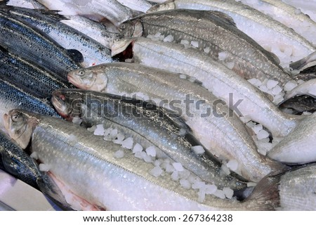 salmon in a fish shop - stock photo