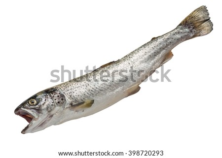 Salmon isolated on white background