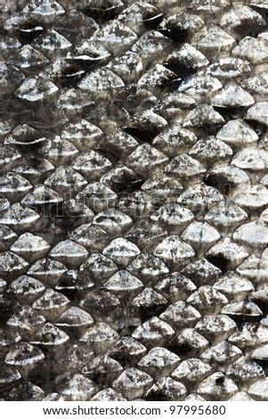 Salmon scales natural texture, See my portfolio for more - stock photo