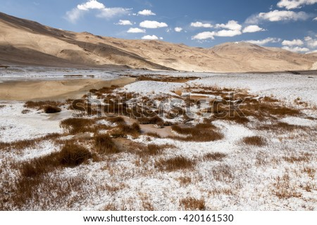 Salt covered plants and banks of the Tso Kar lake, Ladakh, India - stock photo