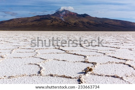 Salt desert  Uyuni, Bolivia - stock photo