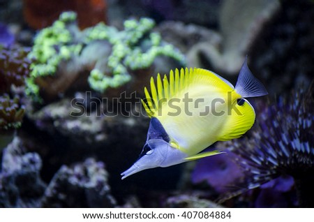 Salt water aquarium fish. Marine fish.