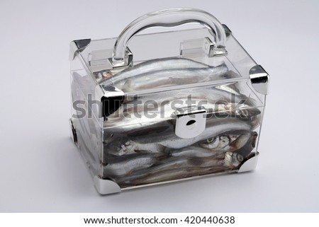 Salted capelin fish in a box isolated on white background - stock photo