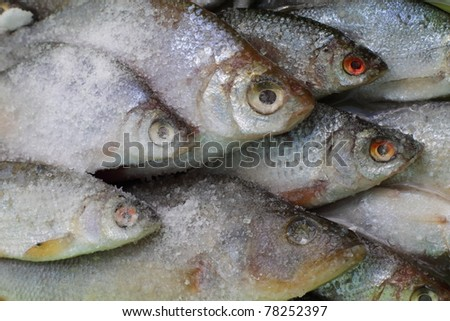 Salted freshwater fish