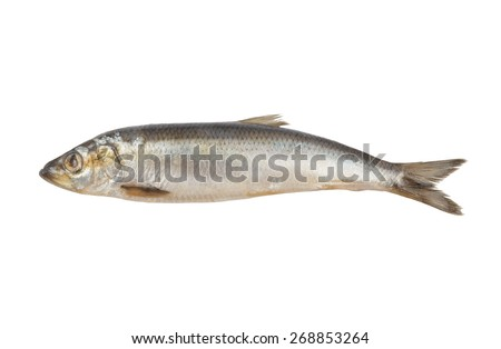 Salted herring fish isolated on white background - stock photo