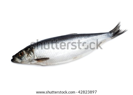 Salted herring on white background closeup