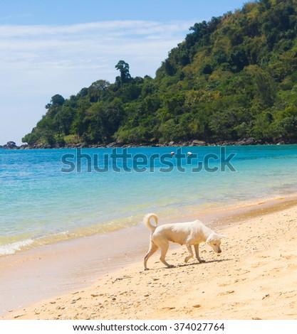 Salty Sea Dog Wet Nose  - stock photo