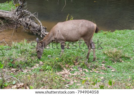 Deer lick park dam