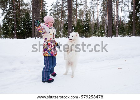 Samoyed dog with a girl for a walk in the winter