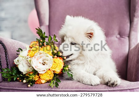 Samoyed puppy with a wedding bouquet - stock photo