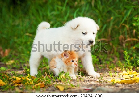 Samoyed puppy with little red kitten outdoors - stock photo