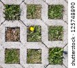 Sample of brick pavement with grass and a yellow flower. - stock photo