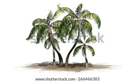 Sample Palm - isolated on white background