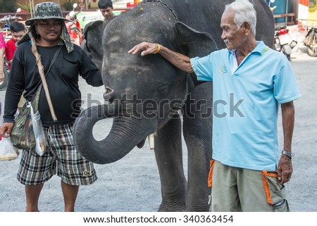 Samutprakarn, THAILAND - OCT 28 : The man touch the baby elephants  . on October 28, 2015 in Samutprakarn, Thailand.