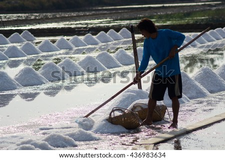 SAMUTSONGKRAM, THAILAND June 13, 2016 Ended a summer season farmers scoop salt to piles in salt farm are to be sold in the next step.