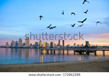 San Diego city scape at dawn with seagulls flying in the foreground - stock photo