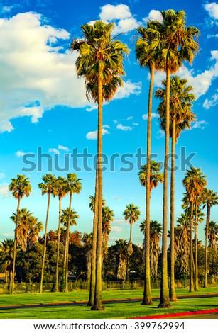 San Diego palm trees and cloudy blue sky.  Southern California coast, USA. - stock photo