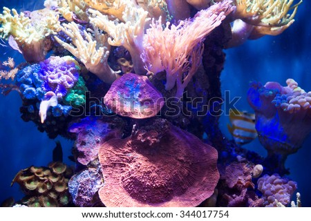 SAN FRANCISCO, USA - OCT 5, 2015: Corals in the Aquarium in the California Academy of Sciences, a natural history museum in San Francisco, California. It was established in 1853