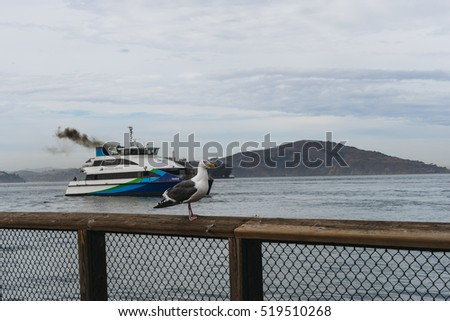 San Francisco, USA - October 1, 2015: Gull and San Francisco Bay Ferry on the Pier 39  in San Francisco.