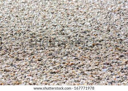 Sand and shells on a Florida beach - stock photo
