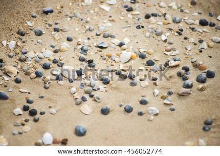 sand and shells on the beach texture - stock photo