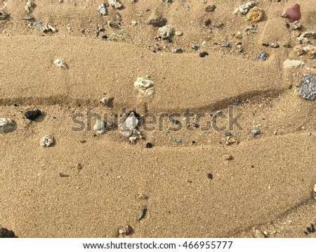sand beach and dried coral texture background. Copy space of travel nature concept.