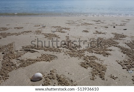 Sand beach with ghost crabs' burrows with sea background