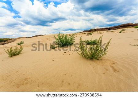 sand desert view - stock photo