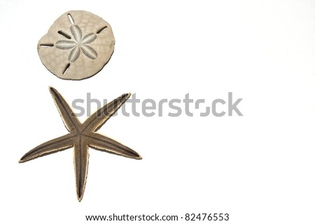 Sand dollar and Starfish on a white background