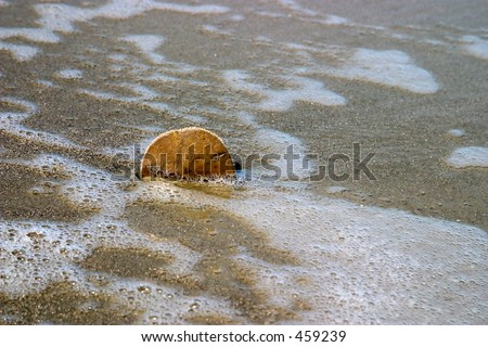 Sand dollar on the beach - stock photo