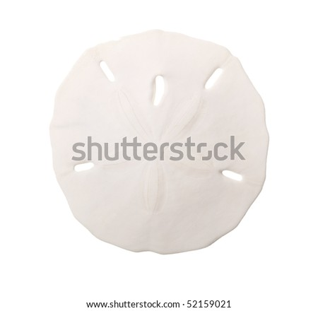 Sand Dollar Sea Shell Isolated on White Background - stock photo