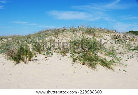 Sand dune from the vicentina coast,Portugal - stock photo