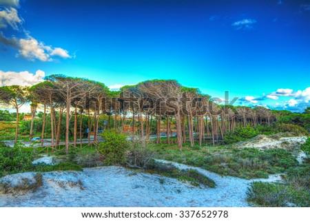 Sand dune in Maria Pia beach, Sardinia - stock photo