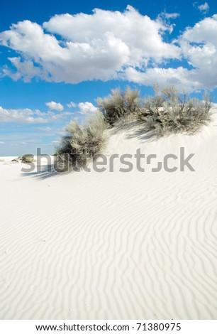 sand dunes and desert plants - stock photo