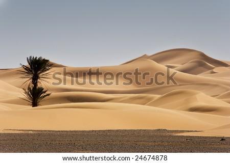 sand dunes at morocco desert, Merzouga - stock photo