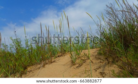 Sand dunes covered with grass. Horizontal.