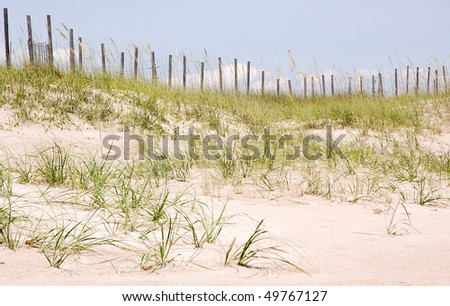 sand dunes, plants and beach fence