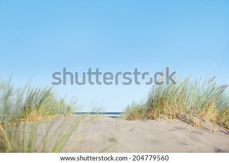 Sand Dunes with Grass on Beach - stock photo